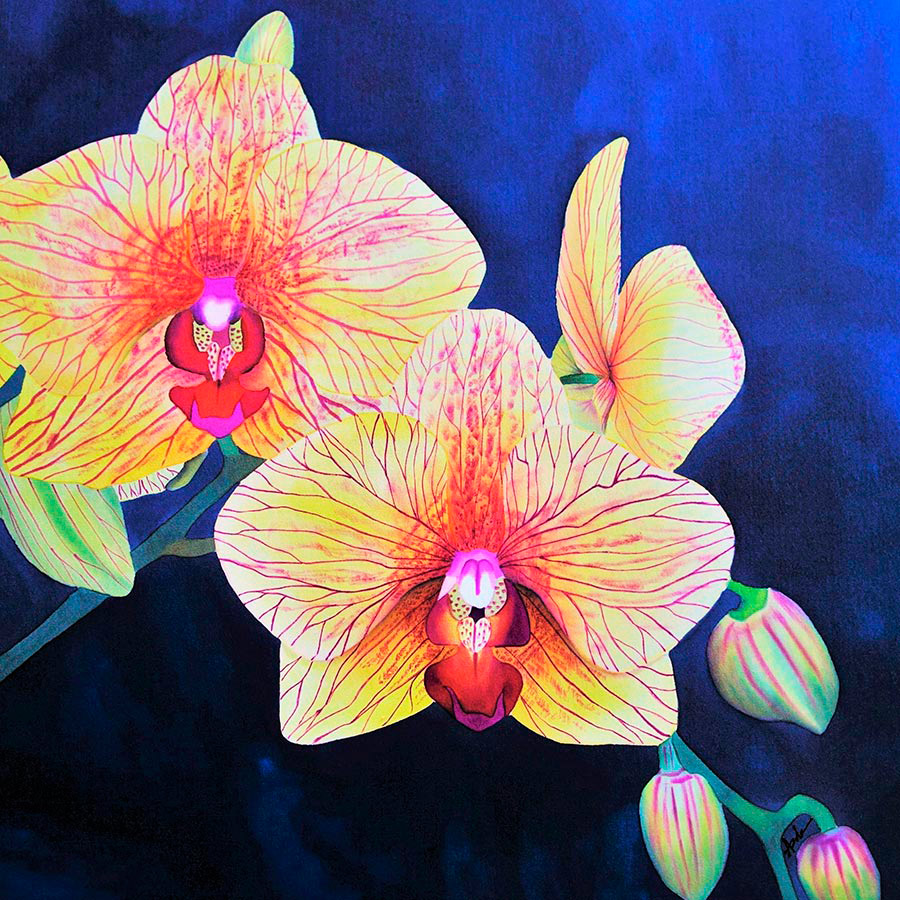 Painting of two orchid blooms