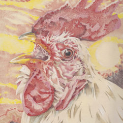 Stewart, Beth - portrait of a rooster in coloured pencil